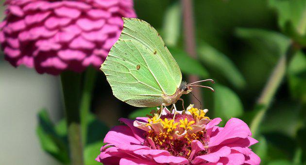 Nature, Flower, Zinnia, Summer, Plant, Insect
