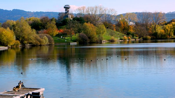 Body Of Water, Lake, River, Tree, Nature, Park, Autumn