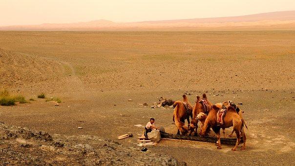 Mongolia, Sand, Desert, Human, Camel