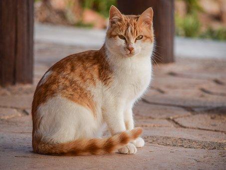 Cat, Animal, Cute, Mammal, Looking, Nature, Stray
