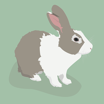 Rabbit, Bunny, Cute, Animal, Hare, Easter, Graphic
