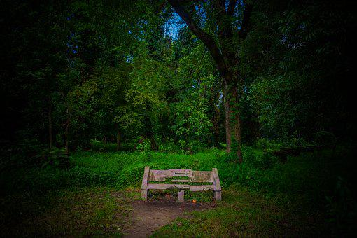 Tree, Wood, Nature, Grass, Bench, Outdoors, Landscape