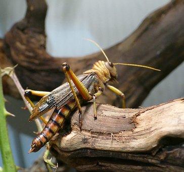Insect, Vermin, Wilhelma Zoo Stuttgart, Nature, Antenna