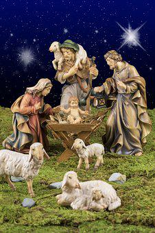Sheep, Lamb, Animal, Schäfchen, Christmas, Reborn