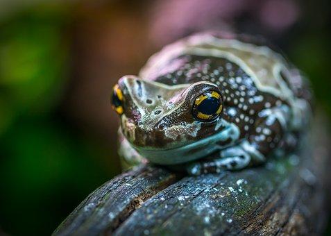 Nature, Living Nature, Animals, Little, Frog, Exotarium