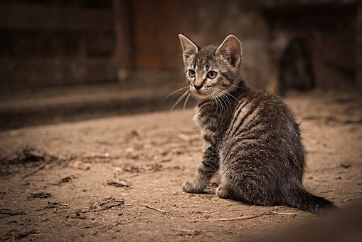 Nature, Animal, Cute, Cat, Mammal, Kitten, Pet