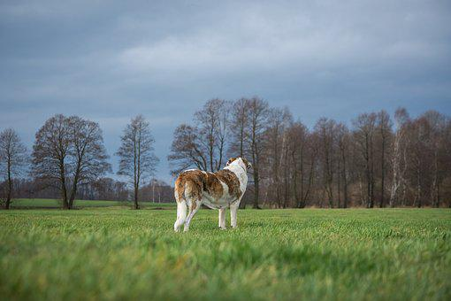 Dog, Grass, Nature, Field, Meadow, Landscape, Lonely