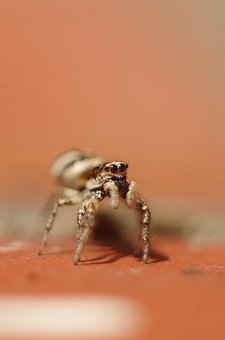 Nature, Insect, Animal World, Animal, Spider