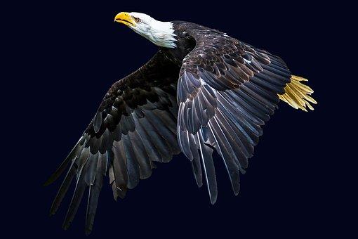 Animal, Bird, Adler, Animal World, Wing, Nature