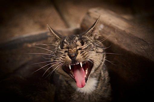 Animal, Nature, Cat, Animal World, Domestic Cat