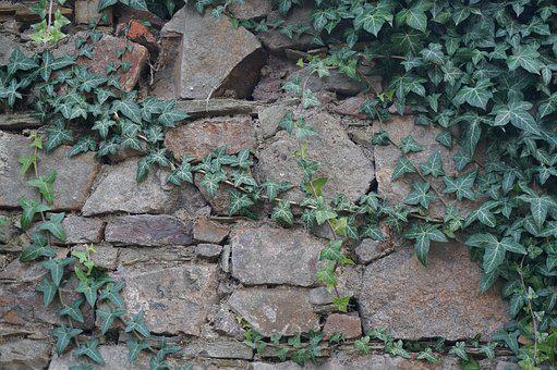 Wall, Ivy, Old, Old Wall, Stone Wall, Texture, Nature