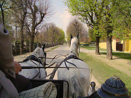 Carriage, White Horses, Ride, Atmosphere, Tree, Outdoor