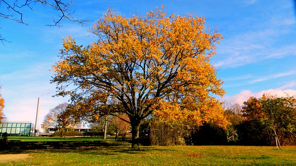 Tree, Autumn, Park, Landscape, Nature, Freiburg