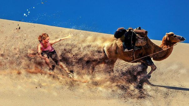 Sport, Desert, Sand, Travel, Camel