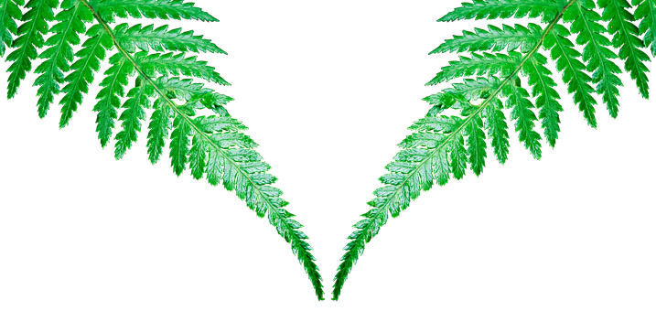 Leaf, Plant, Nature, Isolated, Growth, Fiddlehead, Fern