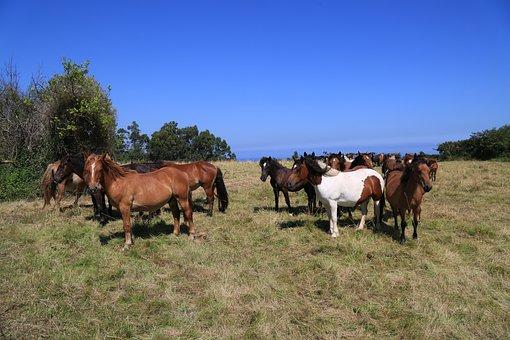 Farm, Henar, Herd, Field, Pastures, Livestock, Cavalry