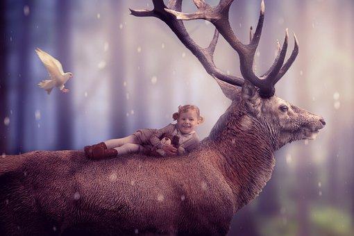 Mammal, Hirsch, Animal World, Nature, Girl, Child, Fog
