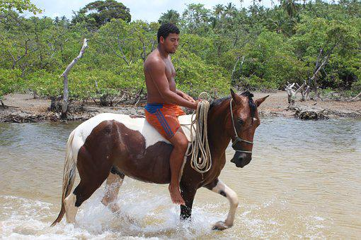 Body, Of, Water, Nature, Horse, Equine