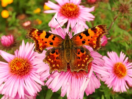 Nature, Flower, Plant, Summer, Insect, Butterfly
