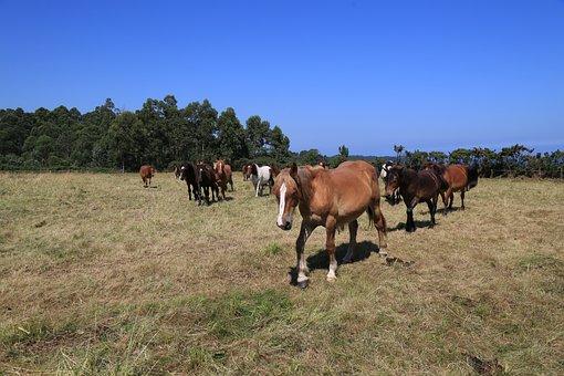 Henar, Farm, Lawn, Field, Pastures, Livestock, Mare