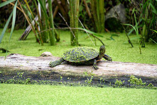 Grass, Nature, Animal, Water, Park, Reptile, Turtle