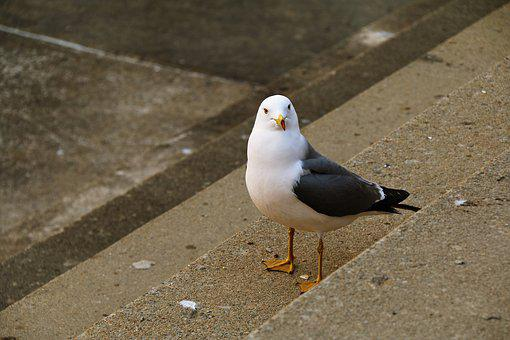 New, Seagull, Love The Angle, Stairs, Sea Birds, Beach
