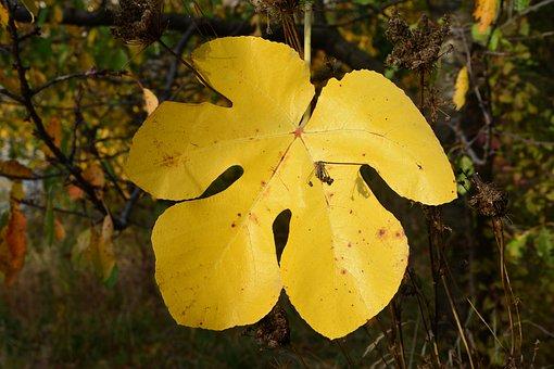Leaves, Nature, Autumn, Outdoor, Seasons Tree