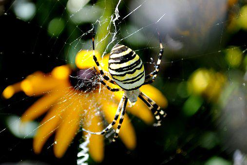 Insect, Nature, Animal World, Animal, Spider, Garden