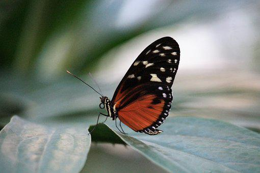Butterfly, Insect, Nature, Wing, Summer, Animal World