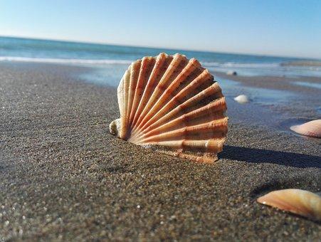 Costa, Beach, Shell, Sea, Sand, Exoskeleton, Summer