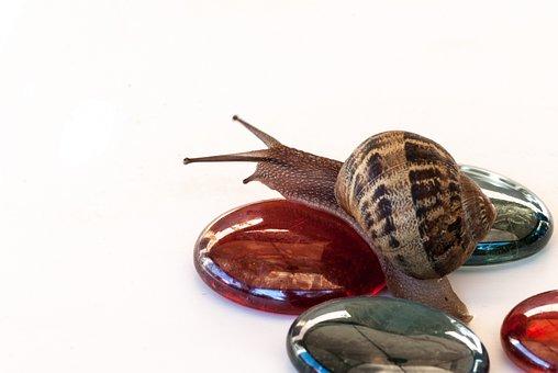 Snail, Nature, Wallpaper, Clam, Food, Exoskeleton, Slow