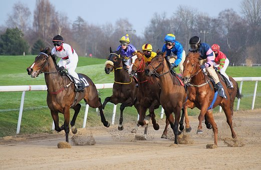 Race Track, Horse, Jockey, Race, Whole Blood, Horses