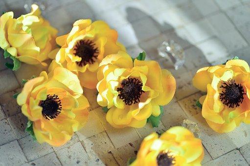 Flowers, Plant, Vivid, Petal, Anemone, Yellow