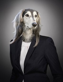 Portrait, Dog, Animal, Suit, Business, Woman, Bitch