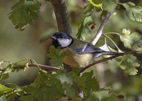 Nature, Aves, Outdoors, Tree, Animals, Small, Songbird