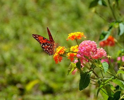 Nature, Insect, Flower, Butterfly, Flora, Summer