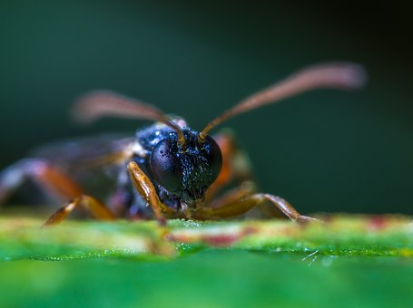 Insect, Facet, Portrait, Macro