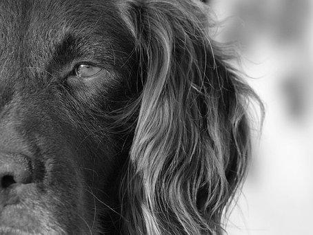 Animal, Dog, Pet, Hound, Black And White, Doggie