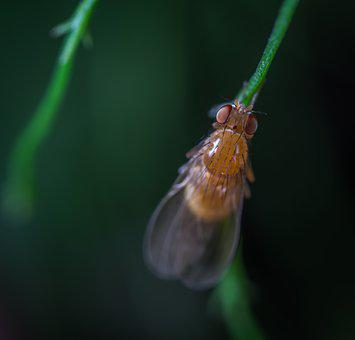 Insect, Fly, Stem, Macro