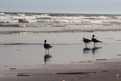 Water, Bird, Sea, Beach, Ocean, Seashore, Lake, Nature