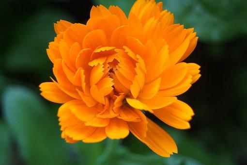 Nature, Flower, Plant, Summer, Leaf, Petal, Bright