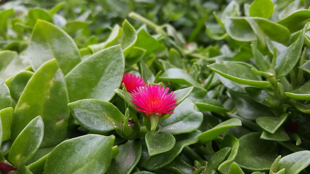 Nature, Leaf, Plant, Approach, Flower, Healthy, Herbal