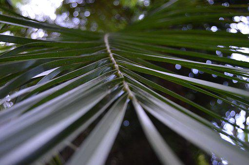 Nature, Leaf, Outdoors, Tree, Flora, Growth