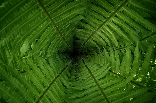Leaf, Plant, Growth, Nature, Background, Fern, Summer