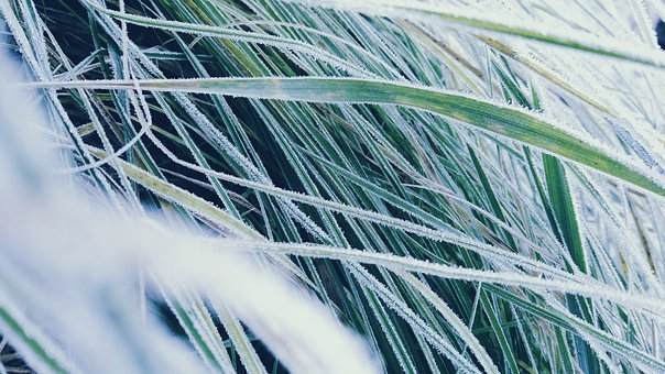Grass, Icing, Detail, Rime, Frost, Snow, Nature, Winter