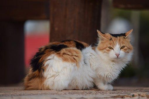 Cat, Stray, Cute, Animal, Mammal, Portrait, Fur