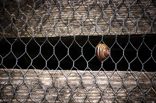 Background, Pattern, Fence, Wall, Snail, Structure