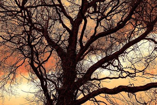 Tree, Branch, Bare, Leafless, Winter Tree, Silhouette
