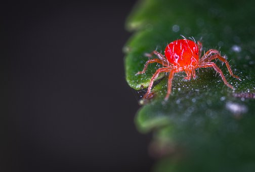 Nature, Bespozvonochnoe, A Spider-like Insect, Mite