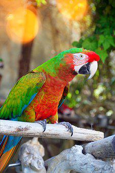 Parrot By Temperament, Bird, Nature, Animal